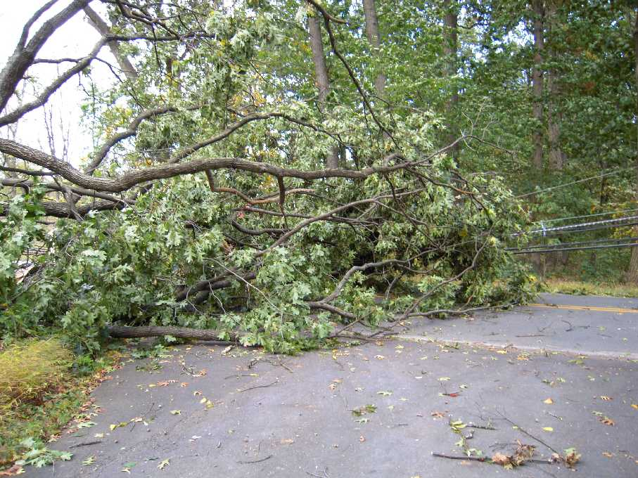 Powerless after trees topple